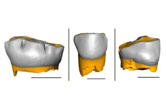 Neandertal come noi: i loro neonati avevano gli stessi tempi di svezzamento dell'Homo sapiens